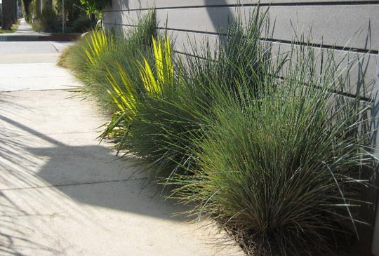 Small space filler ornamental grass design inspiration for Short growing ornamental grasses